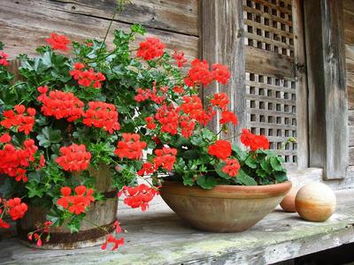 Háromszor lesz virágvásár Komlón