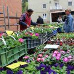 Szép forgalmat bonyolított le az első virágvásár