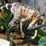 """Az """"Év ősmaradványa 2019″ – A Komlosaurus a jelöltek között"""