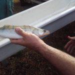 Horgászat: telepítések, korlátozások
