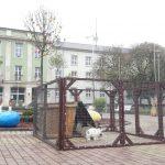 Nyuszisimogatás a Városház téren