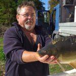 Pontyok érkeztek tavainkba – rekordtelepítés a horgász egyesületnél